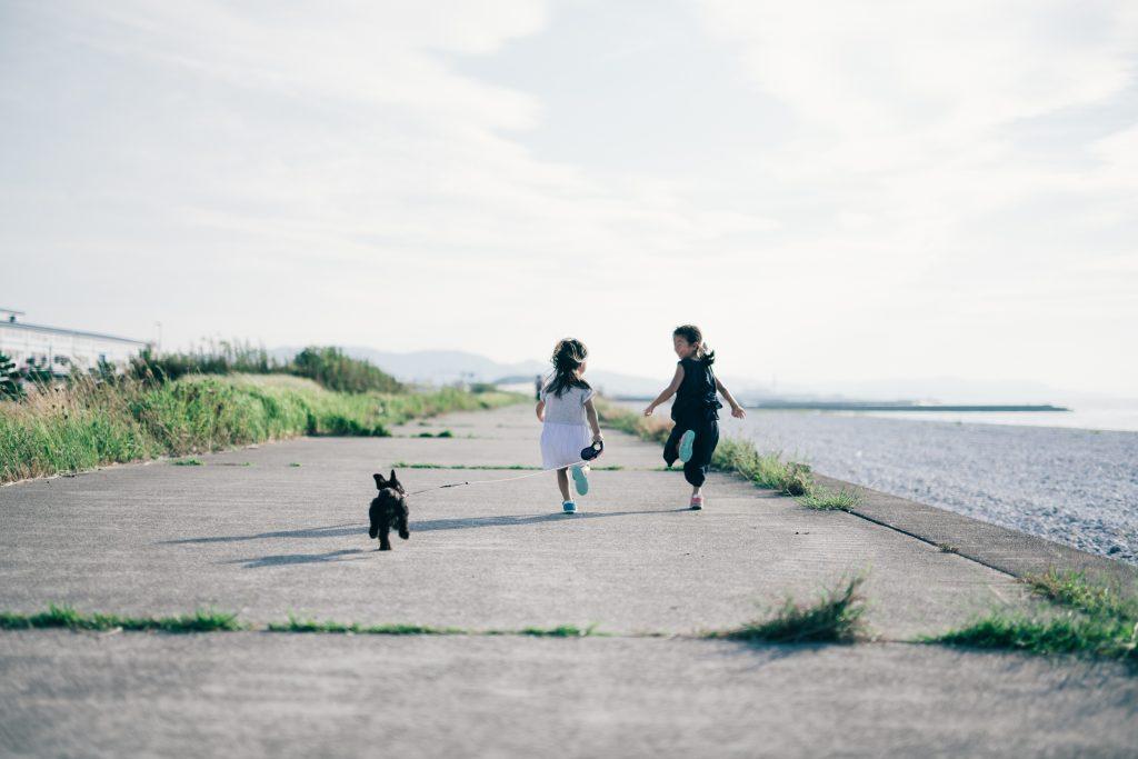 ミニチュアシュナウザー 散歩デビュー